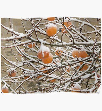 Snow and Kaki Fruit Poster