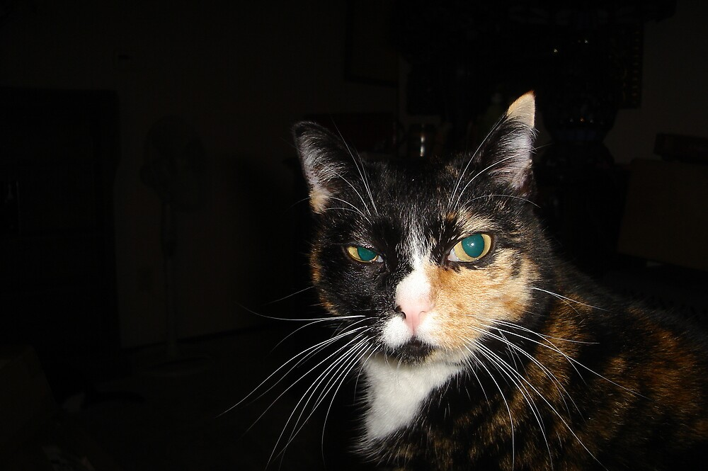 Kiss my What? Disdainful Tortie Calico Cat by kristalmania