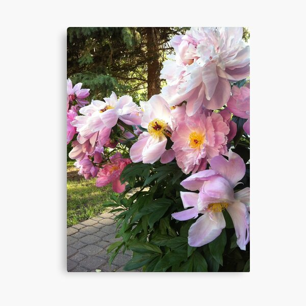 Magic in the Peonies Canvas Print
