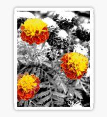Marigolds Sticker
