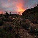Cholla Sunset by DawsonImages