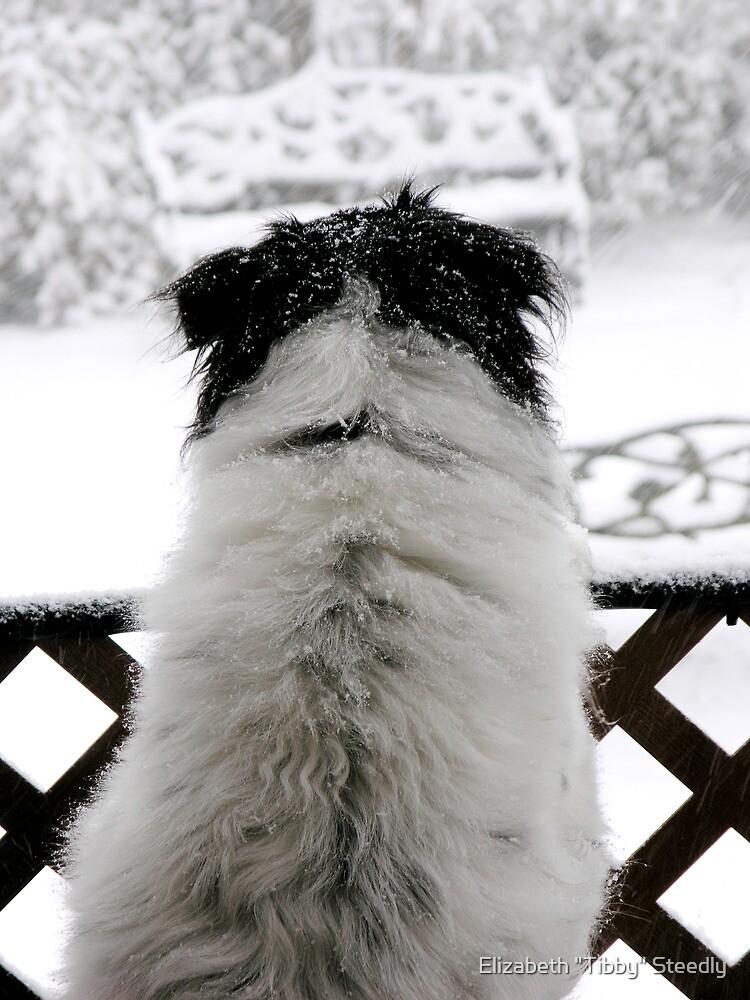 Dottie, Snow Watcher by Tibby Steedly