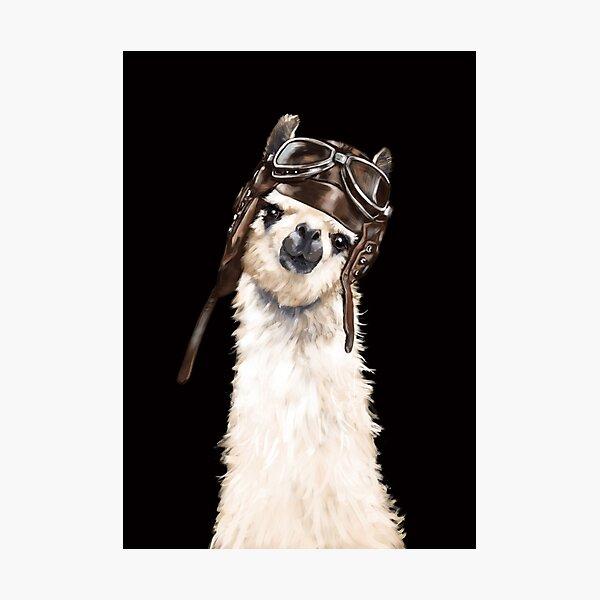 Pilot Llama in Black Photographic Print