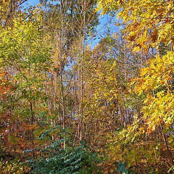 Oak Forest by LynyrdSky