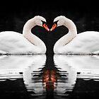 Swans by (Tallow) Dave  Van de Laar
