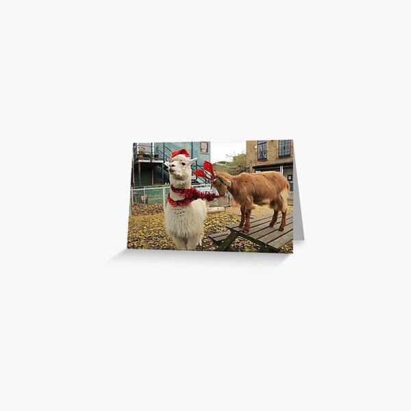 Vauxhall City Farm - Alpaca & Goat, Christmas (Jerry & Barney) Greeting Card