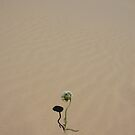 Flower in the Dunes by Dilshara Hill