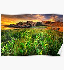 Summer Willow Lake Sunset 1 Poster