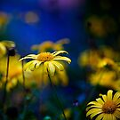yellow flowers by Carol Yepes