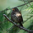 Sparrow Carols by DJ LeMay