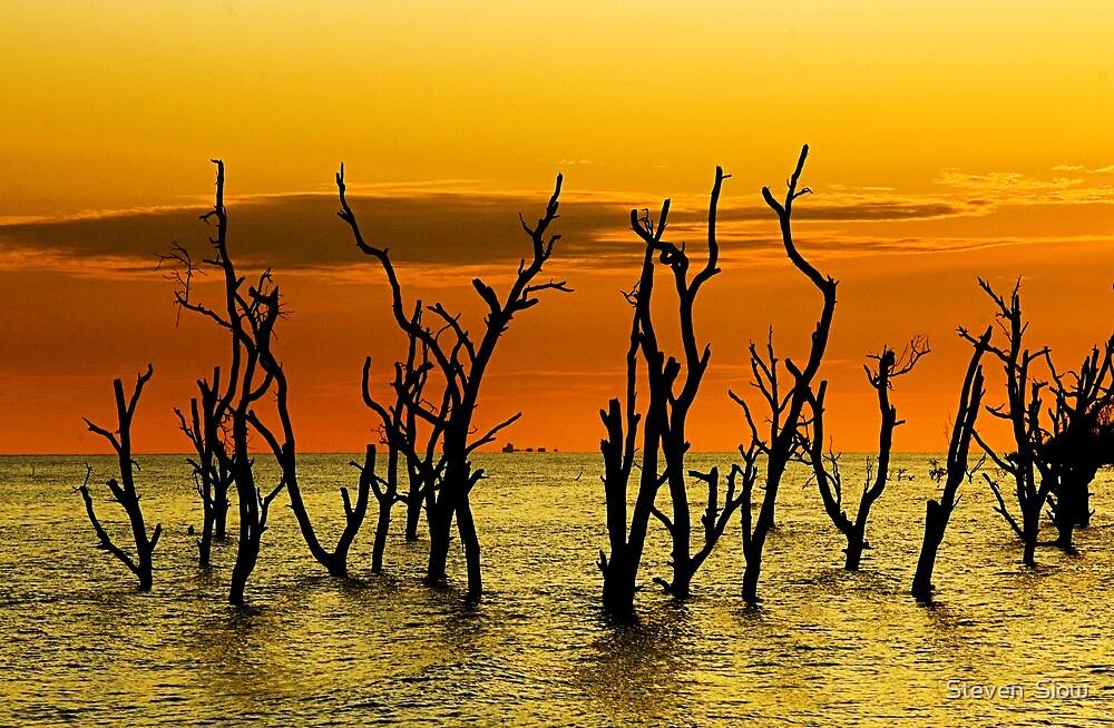 Golden Evening by Steven  Siow
