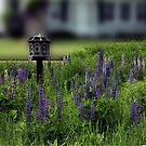 A Home Among the Lupine by Wayne King