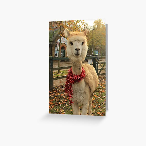 Vauxhall City Farm - Alpaca, Christmas Greeting Card