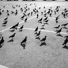 suny birdies by Victor Bezrukov