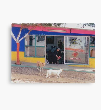 Mexico Dogs HDR  Canvas Print