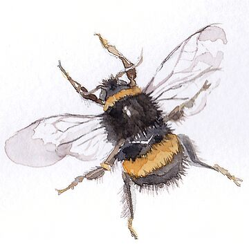 Bee watercolour ©BonniePortraits by BonniePortraits