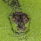 Swamp Monster by Dana Yoachum