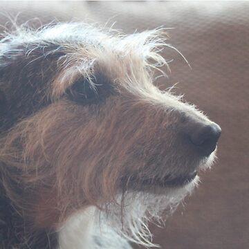 Old Dog by smileykty