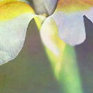 Iris Palm by Rebecca Cozart