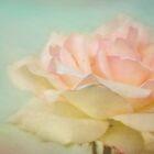 Pastel rose by Eliza1Anna