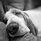 Basset Hound Sleeping by NrthLondonBoy