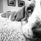 Close up Basset Hound by NrthLondonBoy
