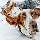 Basset hound dogs in the snow by NrthLondonBoy