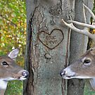 Forest Love by Maria Dryfhout