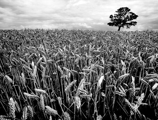 Earn Your Corn by Paul Thompson Photography