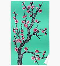 Arizona Green Tea Background Cherry Blossom  Poster