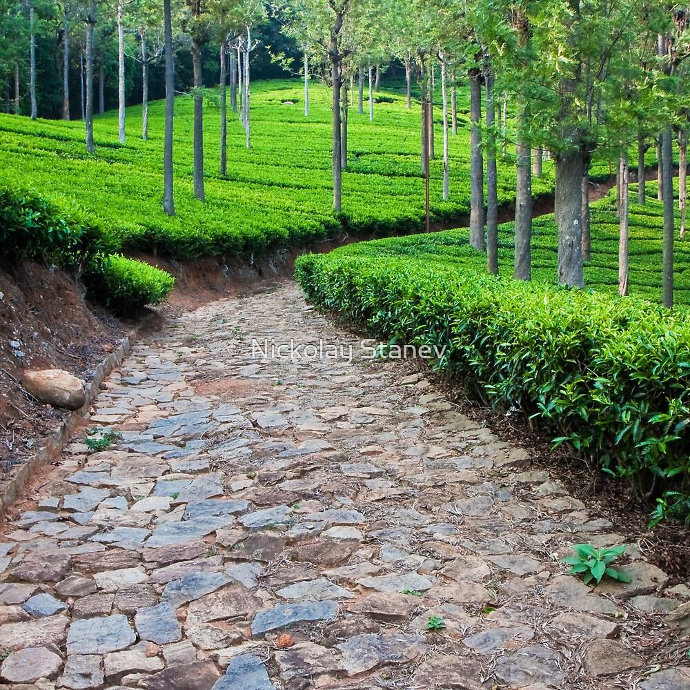 Tea Plantation Road by Nickolay Stanev