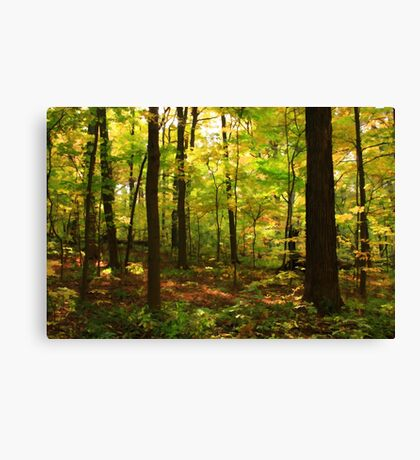 Maple Forest Canvas Print