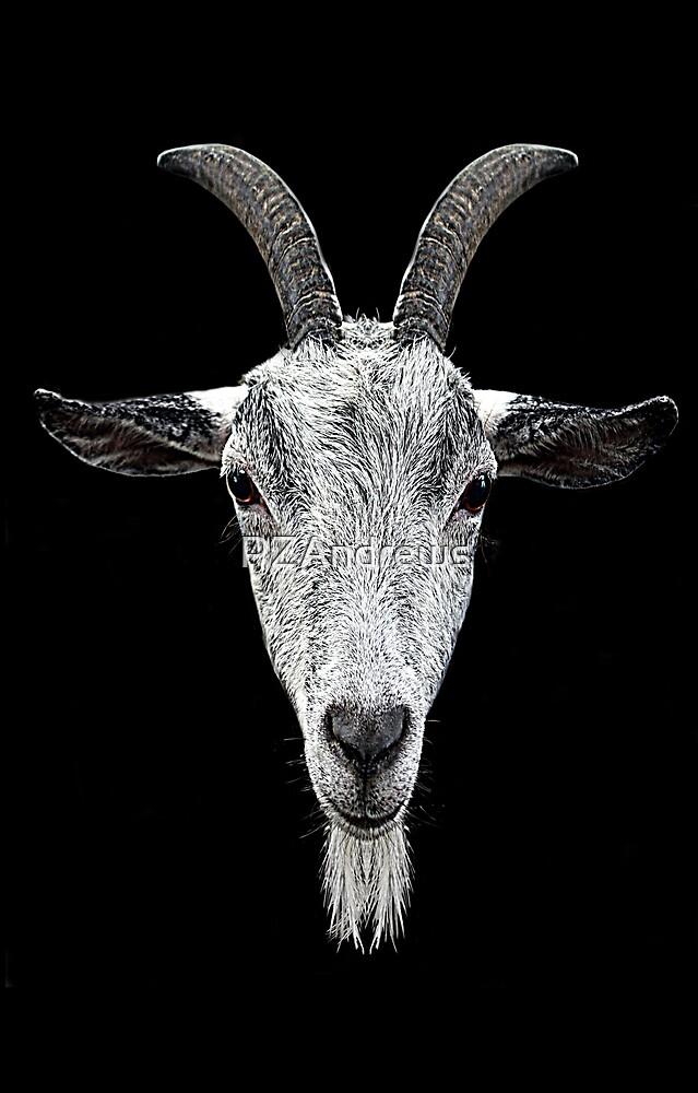 Goat Gaze by PZAndrews