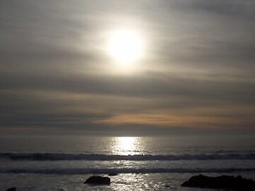 Shining through  on the elephant seals shore by 37giggles