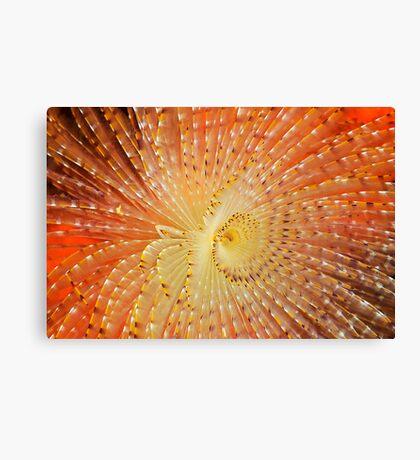 Aquatic Fireworks Canvas Print