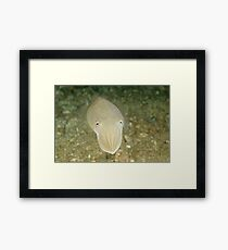 Mourning Cuttlefish Framed Print