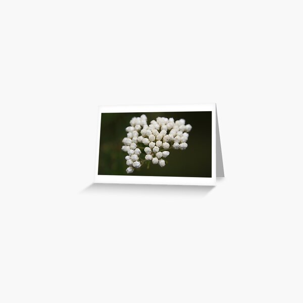White Bouquet  Greeting Card