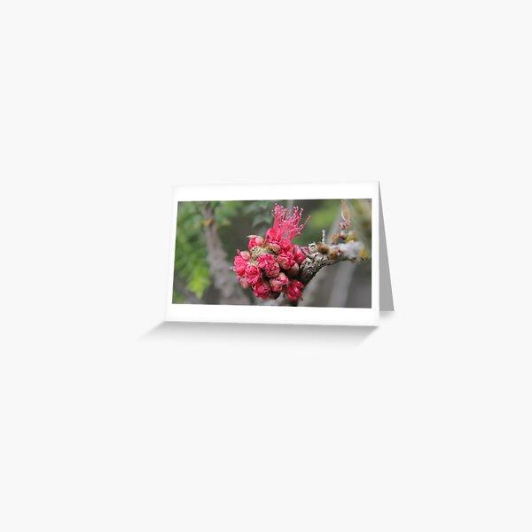 Blooming Xmas Balls Greeting Card