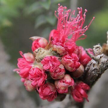 Blooming Xmas Balls by stephentrepreneur