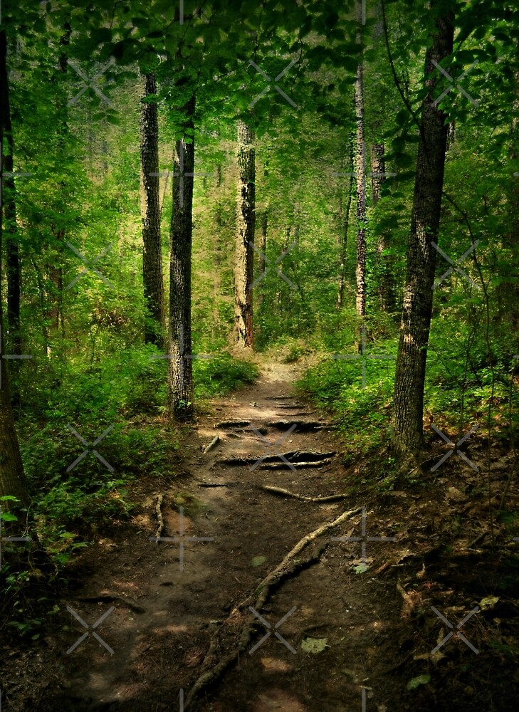 The Hidden Trails of the Old Forests by Scott Mitchell