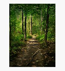 The Hidden Trails of the Old Forests Photographic Print