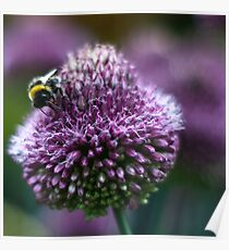 bumblebee deli Poster