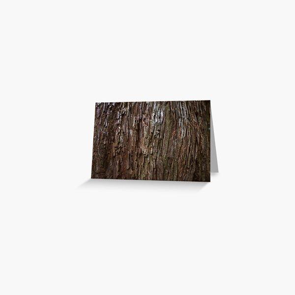 Redwood Bark Greeting Card