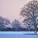 Winter Sunset by Paul Morley