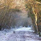 Winter Walk by Paul Morley