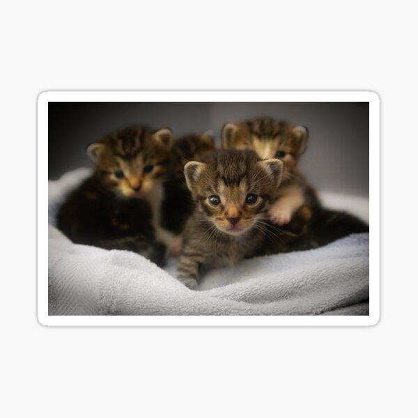 amateur teen les kittens