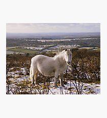 Dartmoor: Snowy White Photographic Print