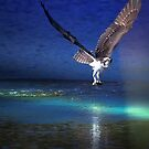 Osprey Catching a Fish with Light Effect by TJ Baccari Photography