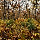 Wentworth Woods  by ashleyDcrouse