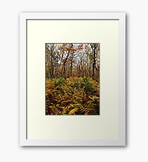 Wentworth Woods  Framed Print